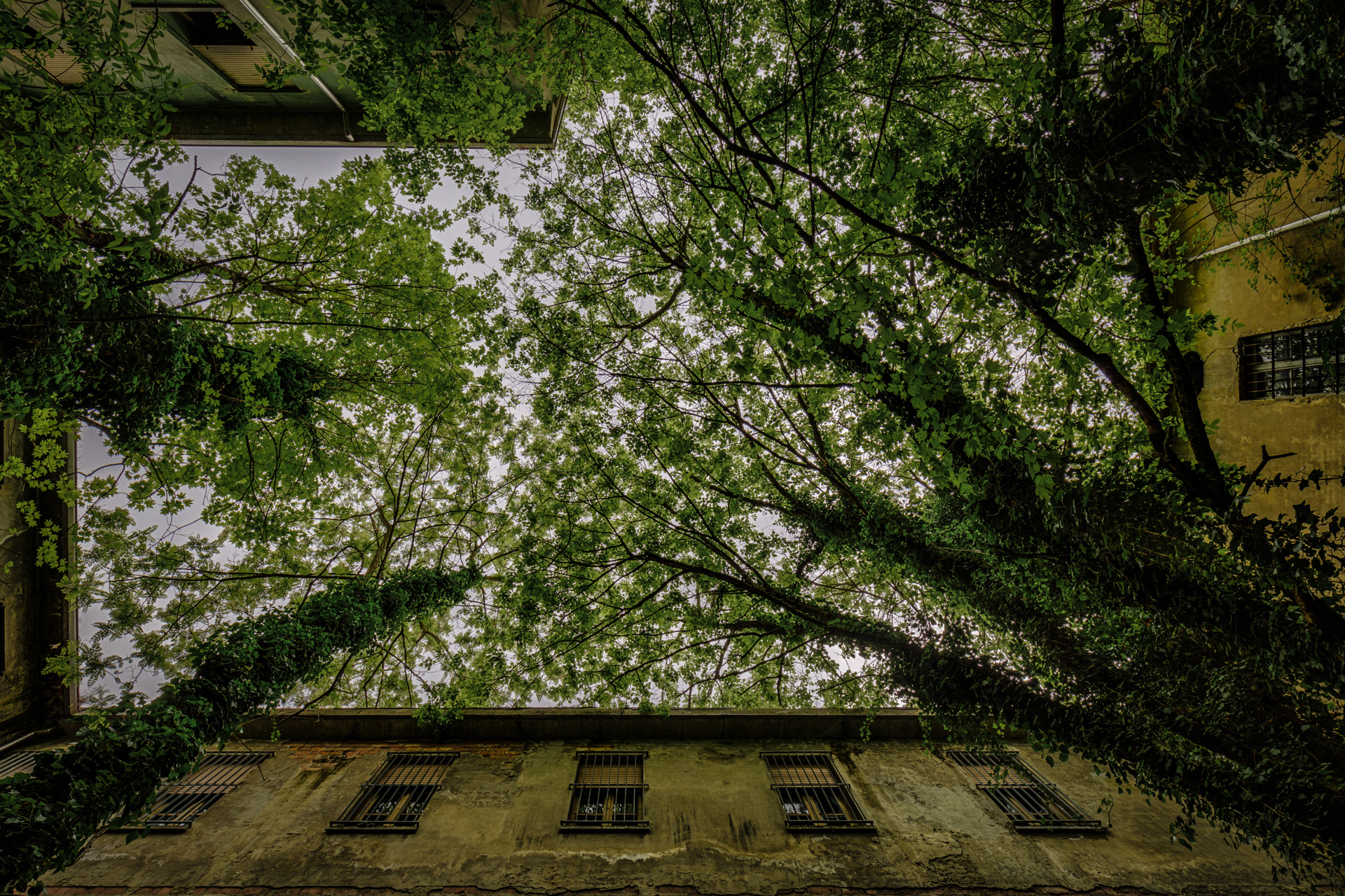 Urban Exploration - Manicomio Di Anime - Green Courtyard